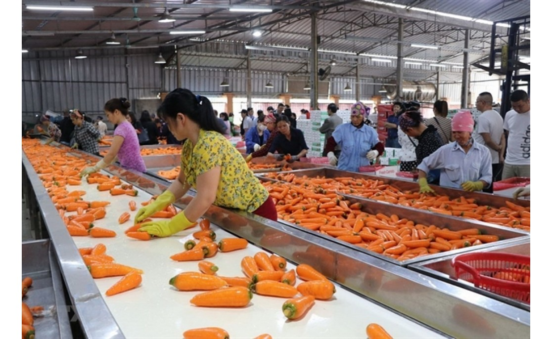Viet Nam News  Economy Agriculture sector needs to develop raw materials to reduce dependence on imports