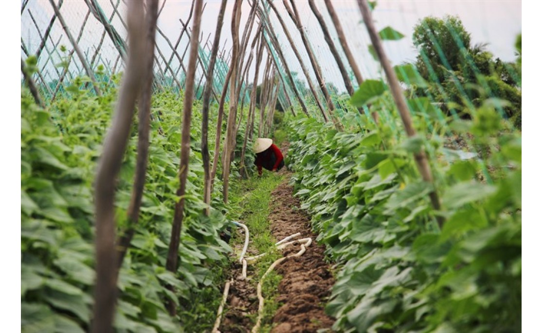 VIETNAM PRIME MINISTER OPENS DOOR FOR ORGANIC FARMERS